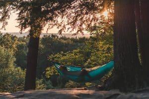 Écouter la nature, c'est bon pour la santé